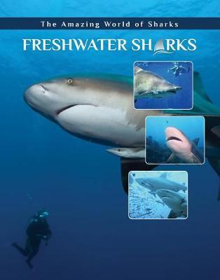 Freshwater Sharks - Amazing World of Sharks (Hardback)