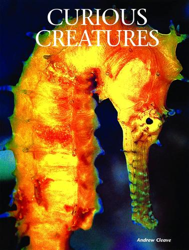 Curious Creatures - Creatures of the Ocean (Hardback)