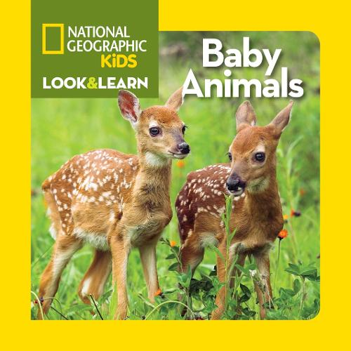 Look and Learn: Baby Animals - Look&Learn (Board book)