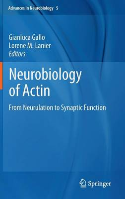 Neurobiology of Actin: From Neurulation to Synaptic Function - Advances in Neurobiology 5 (Hardback)