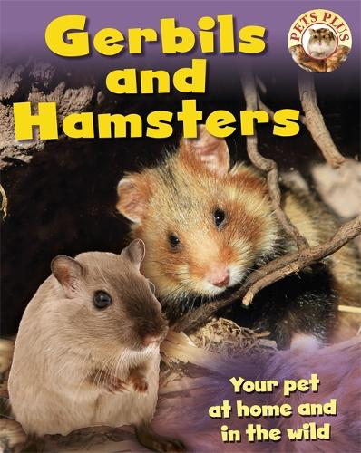 Gerbils and Hamsters - Pets Plus (Paperback)