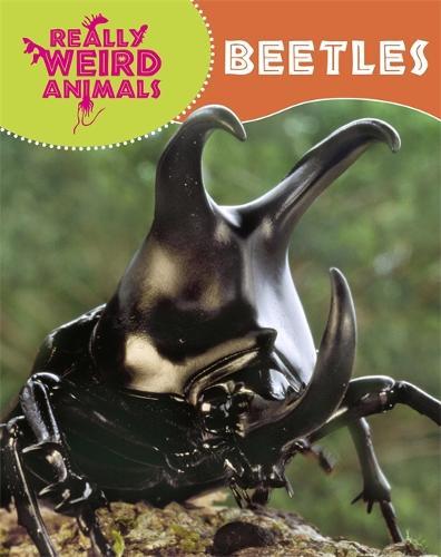 Really Weird Animals: Beetles - Really Weird Animals (Paperback)
