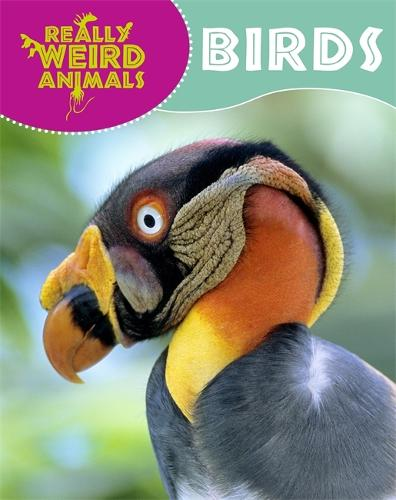 Really Weird Animals: Birds - Really Weird Animals (Paperback)