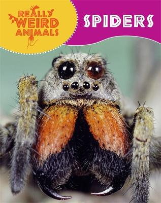 Really Weird Animals: Spiders - Really Weird Animals (Paperback)
