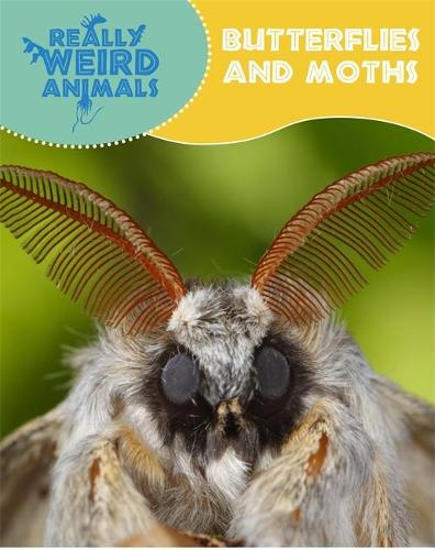 Really Weird Animals: Butterflies and Moths - Really Weird Animals (Paperback)