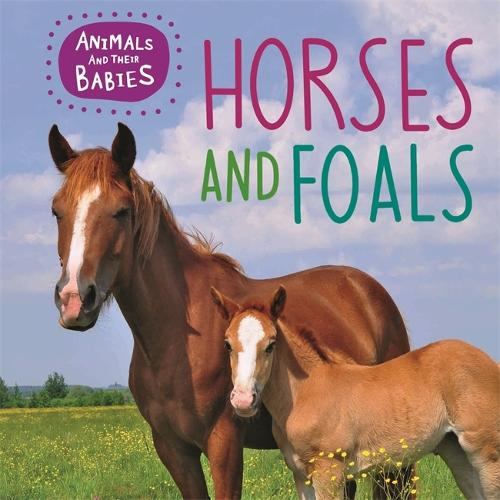 Animals and their Babies: Horses & foals - Animals and their Babies (Hardback)