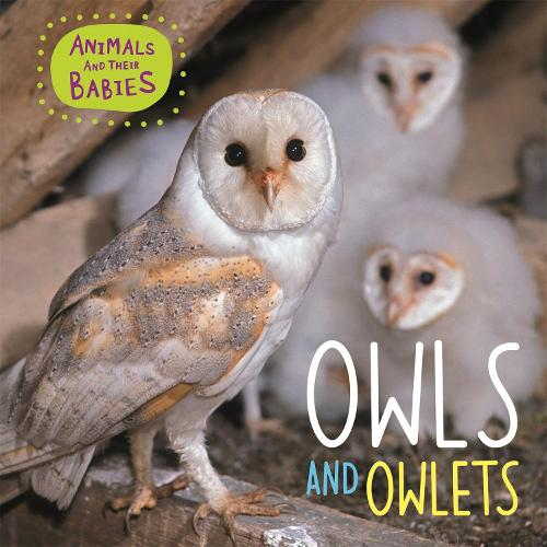 Animals and their Babies: Owls & Owlets - Animals and their Babies (Paperback)