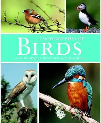 Birds (Hardback)