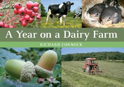 A Year on a Dairy Farm (Paperback)