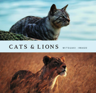 Cats and Lions (Hardback)