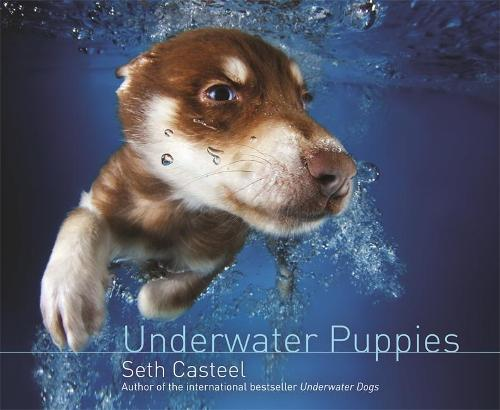 Underwater Puppies (Hardback)