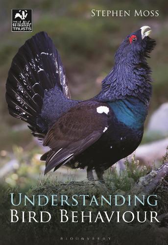 Understanding Bird Behaviour (Paperback)