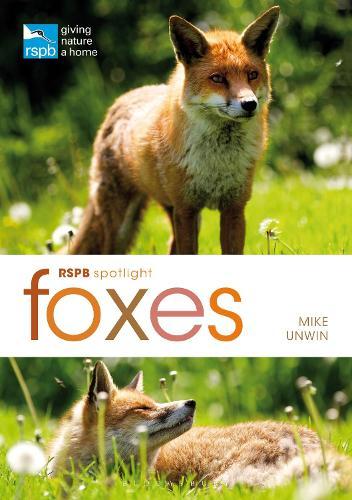 RSPB Spotlight: Foxes (Paperback)