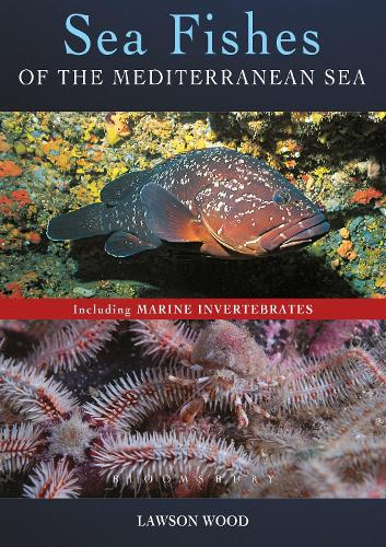Sea Fishes Of The Mediterranean Including Marine Invertebrates (Paperback)