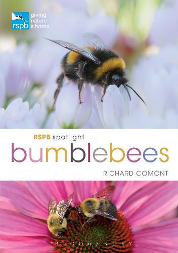 RSPB Spotlight Bumblebees (Paperback)