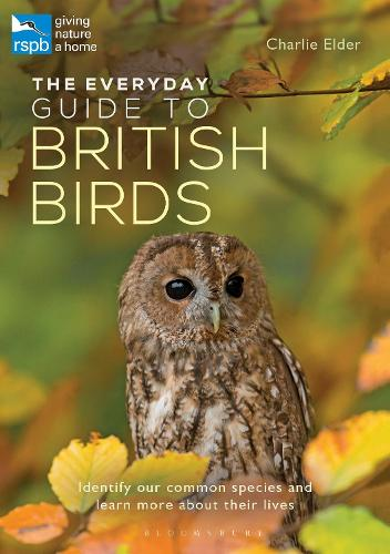 The Everyday Guide to British Birds: Identify our common species and learn more about their lives (Paperback)