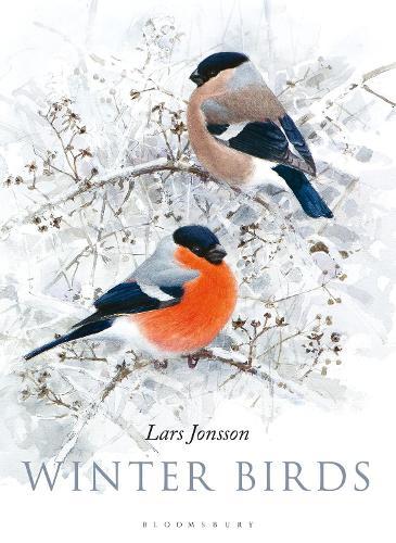 Winter Birds (Hardback)