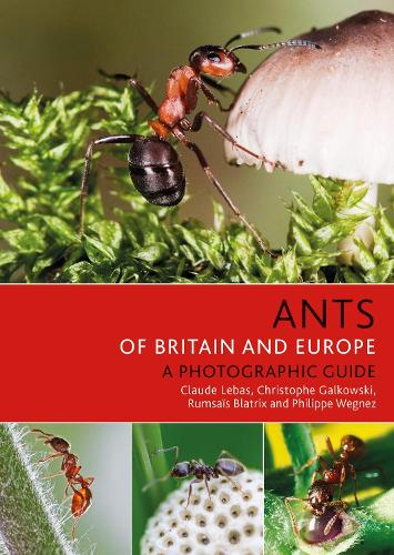 Ants of Britain and Europe (Paperback)