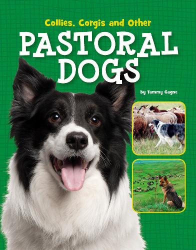 Collies, Corgis and Other Pastoral Dogs - Edge Books: Dog Files (Paperback)