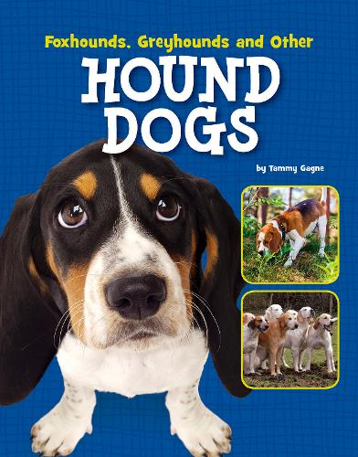 Foxhounds, Greyhounds and Other Hound Dogs - Edge Books: Dog Files (Paperback)