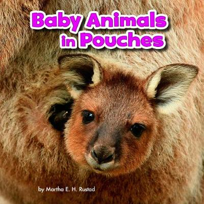 Baby Animals in Pouches - Little Pebble: Baby Animals and Their Homes (Hardback)