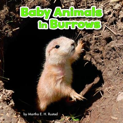 Baby Animals in Burrows - Little Pebble: Baby Animals and Their Homes (Hardback)