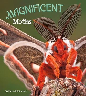 Magnificent Moths - A+ Books: Marvellous Minibeasts! (Hardback)
