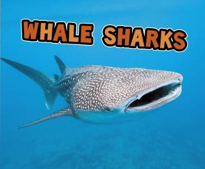 All About Sharks Pack A of 4 - Pebble Plus: All About Sharks (Paperback)