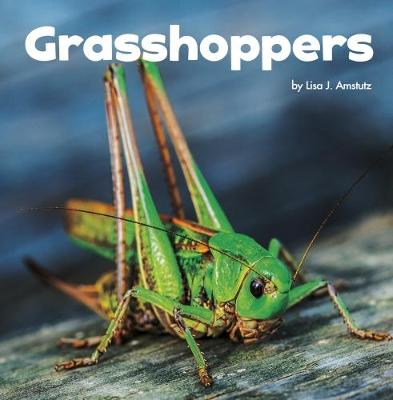 Grasshoppers - Little Pebble: Little Creatures (Hardback)