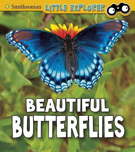 Beautiful Butterflies - Insect Explorer (Hardback)