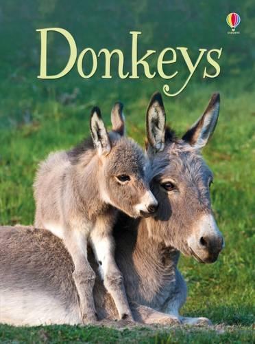 Beginners Donkeys - Beginners Series (Hardback)