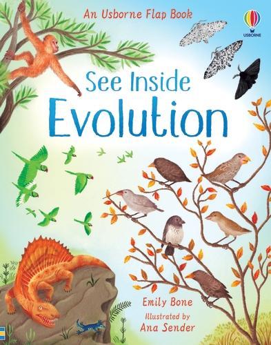 See Inside Evolution - See Inside (Board book)