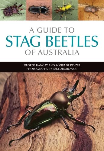 A Guide to Stag Beetles of Australia (Paperback)