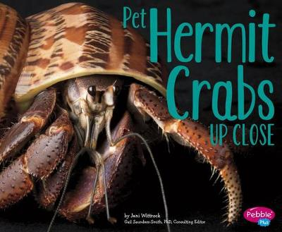 Pet Hermit Crabs Up Close - Pets Up Close (Paperback)