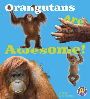 Orangutans are Awesome (Awesome Asian Animals) (Paperback)