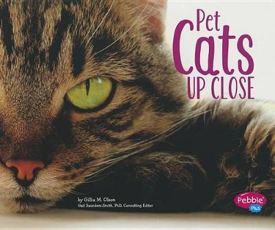 Pet Cats Up Close - Pets Up Close (Paperback)