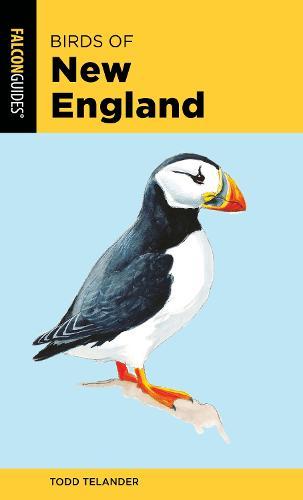 Birds of New England - Falcon Pocket Guides (Paperback)