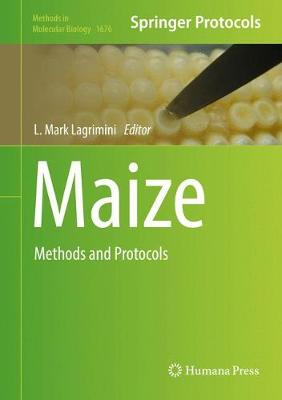 Maize: Methods and Protocols - Methods in Molecular Biology 1676 (Hardback)