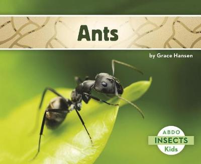 Ants - Insects (Paperback)