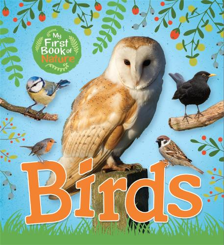 My First Book of Nature: Birds - My First Book of Nature (Paperback)