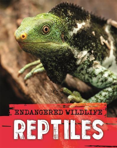 Endangered Wildlife: Rescuing Reptiles (Hardback)