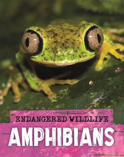 Endangered Wildlife: Rescuing Amphibians (Hardback)