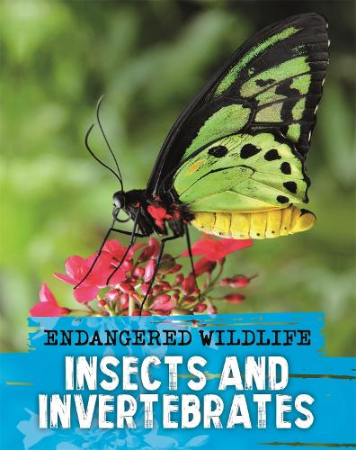 Endangered Wildlife: Rescuing Insects and Invertebrates (Paperback)