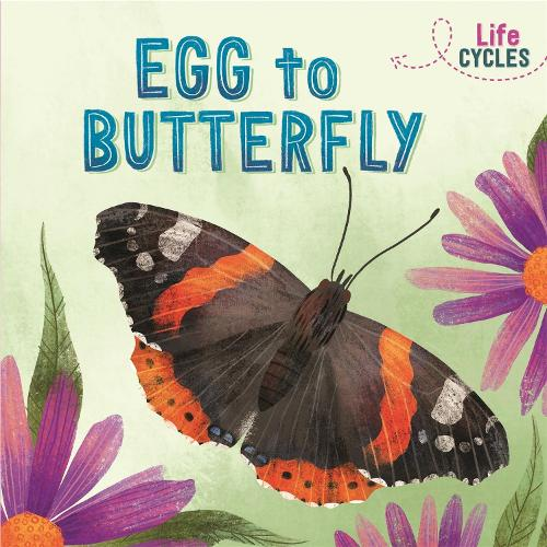 Life Cycles: Egg to Butterfly - Life Cycles (Paperback)