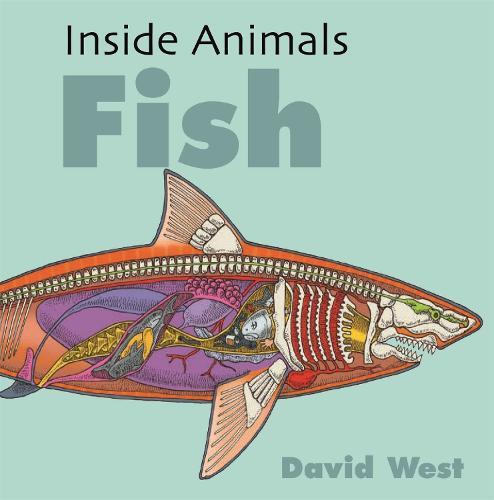 Inside Animals: Fish - Inside Animals (Hardback)