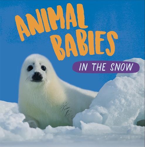 Animal Babies: In the Snow - Animal Babies (Hardback)