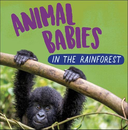 Animal Babies: In the Rainforest - Animal Babies (Hardback)