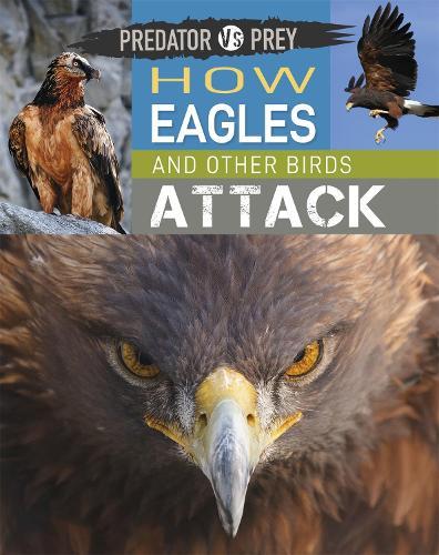 Predator vs Prey: How Eagles and other Birds Attack - Predator vs Prey (Hardback)