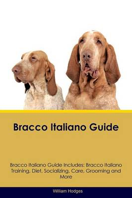 Bracco Italiano Guide Bracco Italiano Guide Includes: Bracco Italiano Training, Diet, Socializing, Care, Grooming, Breeding and More (Paperback)
