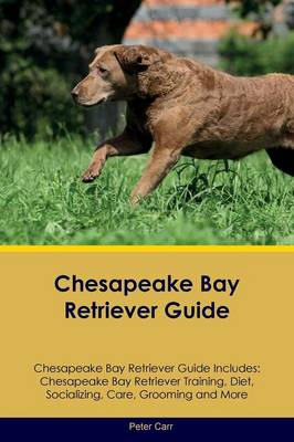 Chesapeake Bay Retriever Guide Chesapeake Bay Retriever Guide Includes: Chesapeake Bay Retriever Training, Diet, Socializing, Care, Grooming, Breeding and More (Paperback)